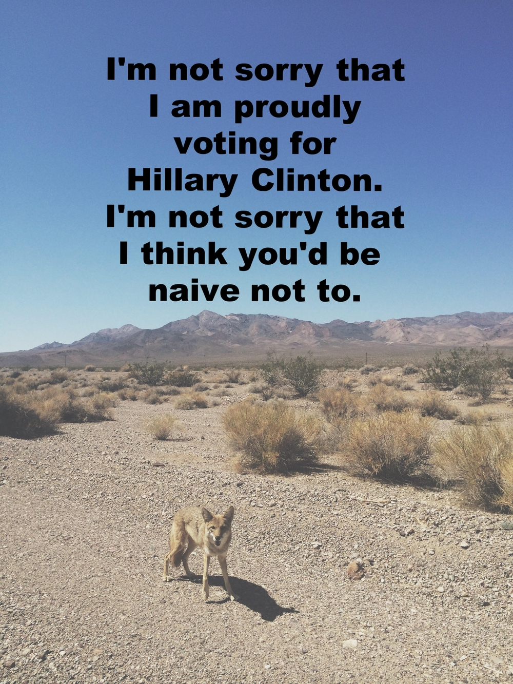 "Anonymous August 2 2016 Image of a swath of desert- gravel, sand, scrubby trees. Low mountains in the background. A small fox stands in the foreground, looking directly at the camera. ""I'm not sorry that I am proudly voting for Hillary Clinton. I'm not sorry that I think you'd be naive not to"" is overlaid."