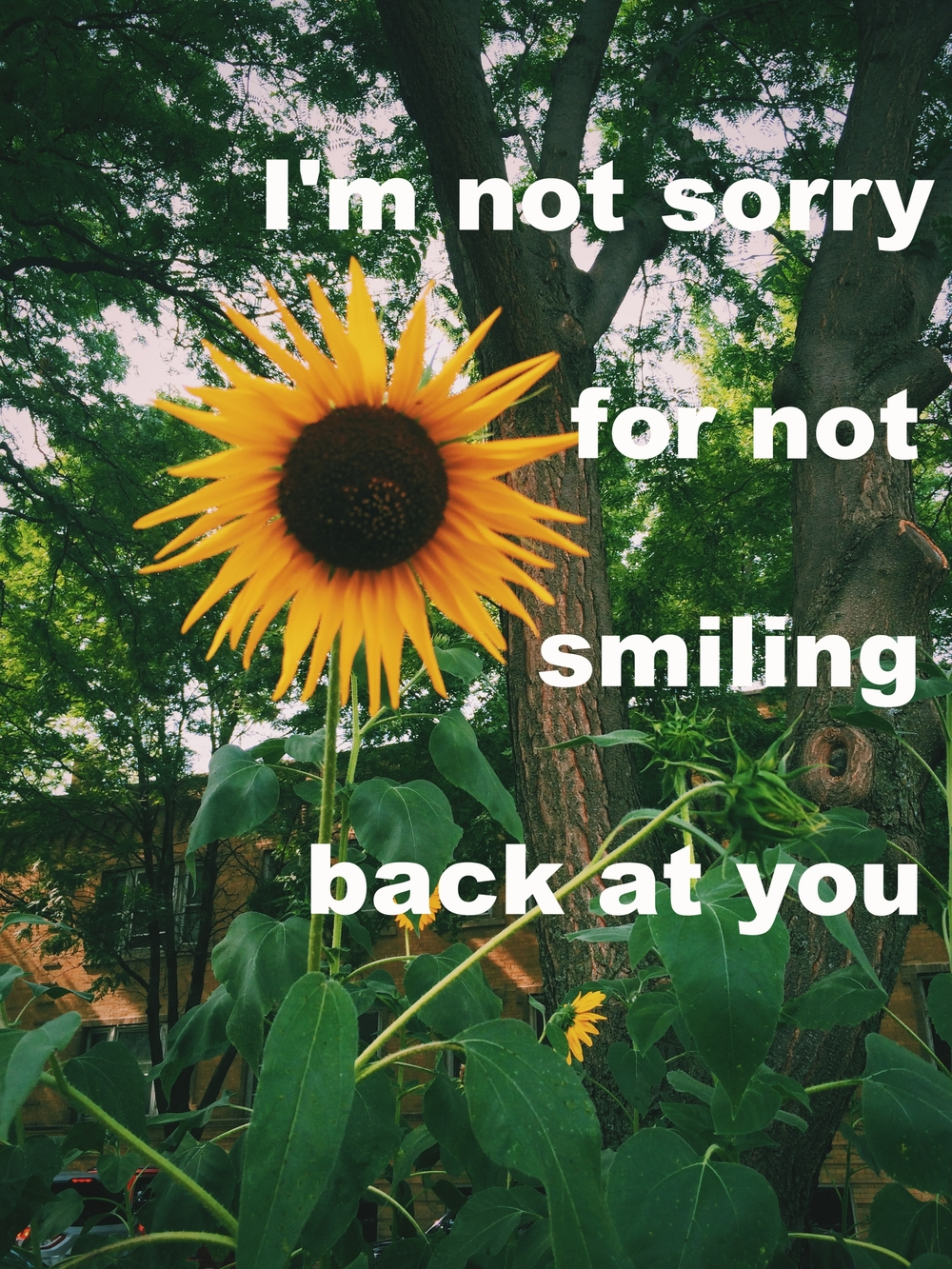 "Anonymous July 17 2016 Image of a sunflower facing forward among other sunflowers. ""I'm not sorry for not smiling back at you"" is overlaid."
