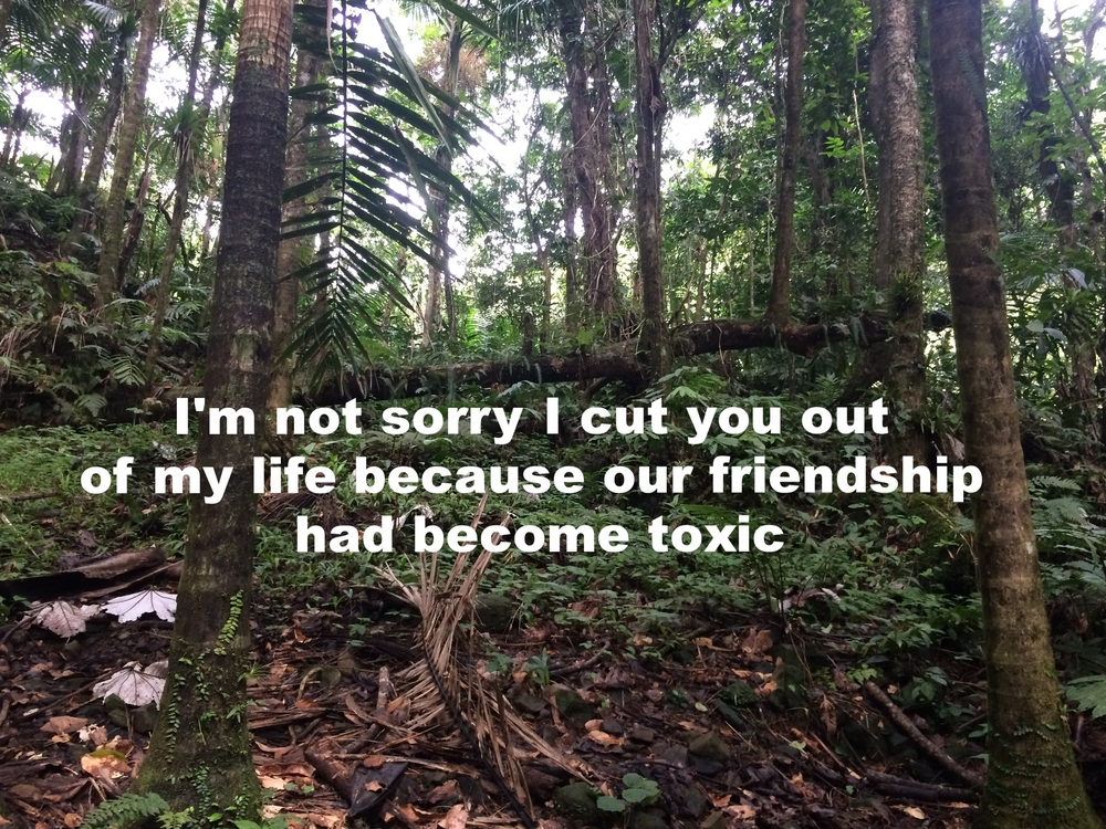 "Anonymous August 4 2016 Image of the forest, mostly the trunks of trees featured. A long log stretches across the back of the image, and fallen branches lie in the front of the image. Green plants crawl up tree trunks and cover the ground. ""I'm not sorry I cut you out of my life because our friendship had become toxic"" is overlaid."