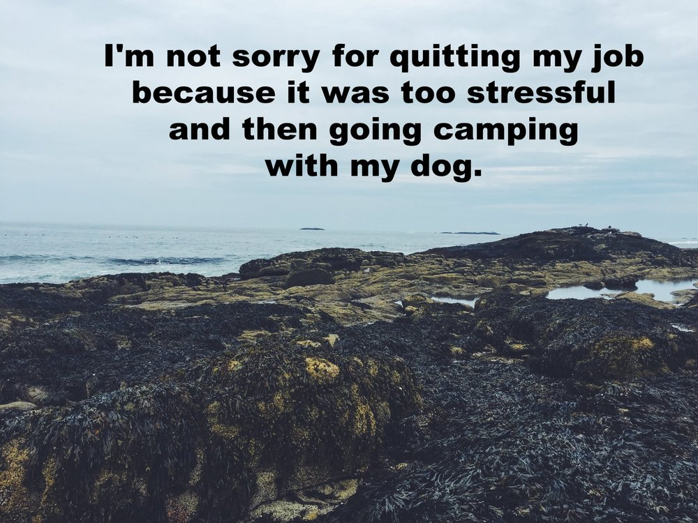 "Heather Karin September 7 2016 Image of rocks covered with dark black seaweed at the edge of the ocean. The ocean and sky are grey-blue. ""I'm not sorry for quitting my job because it was too stressful and then going camping with my dog"" is overlaid."