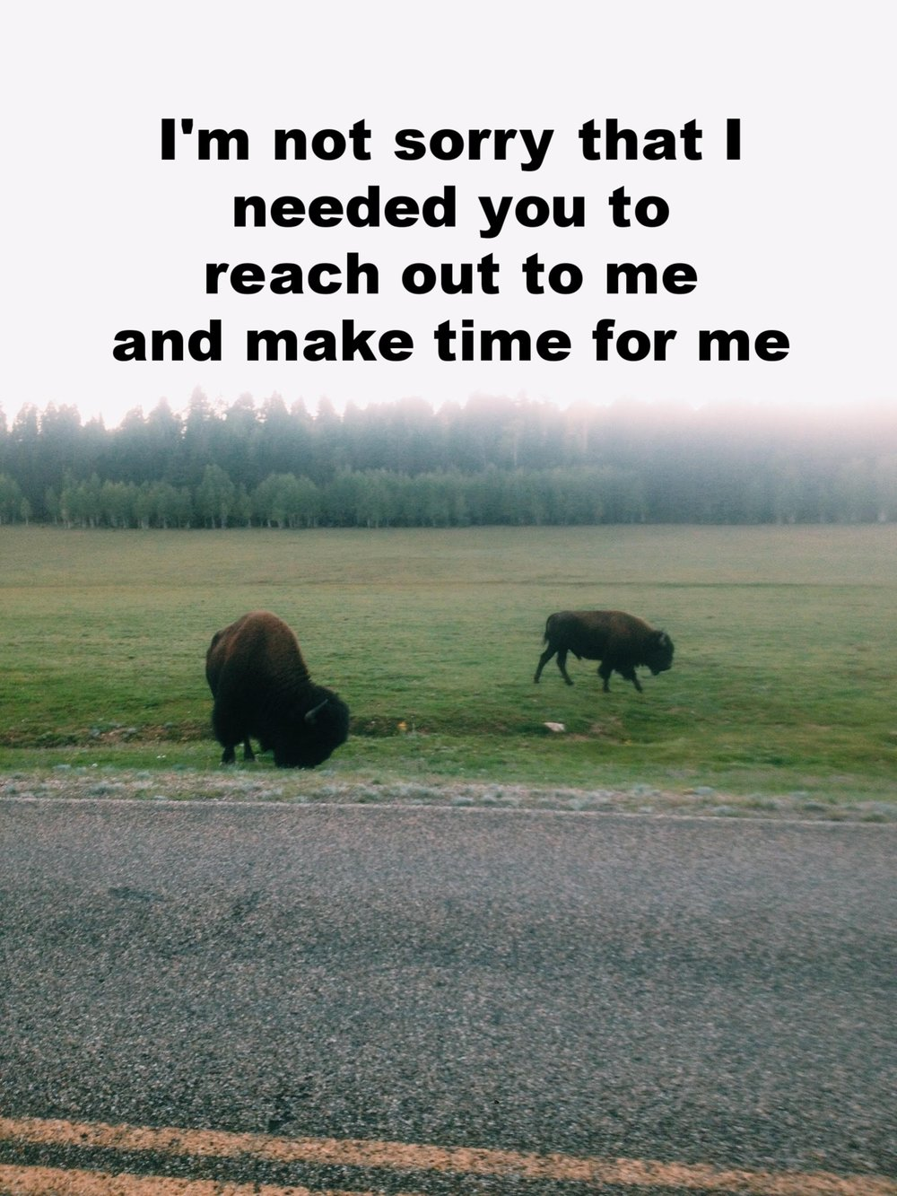 """Anonymous November 22 2016 Image of two buffalo in a field. """"I'm not sorry that I needed you to reach out to me and make time for me"""" is overlaid."""