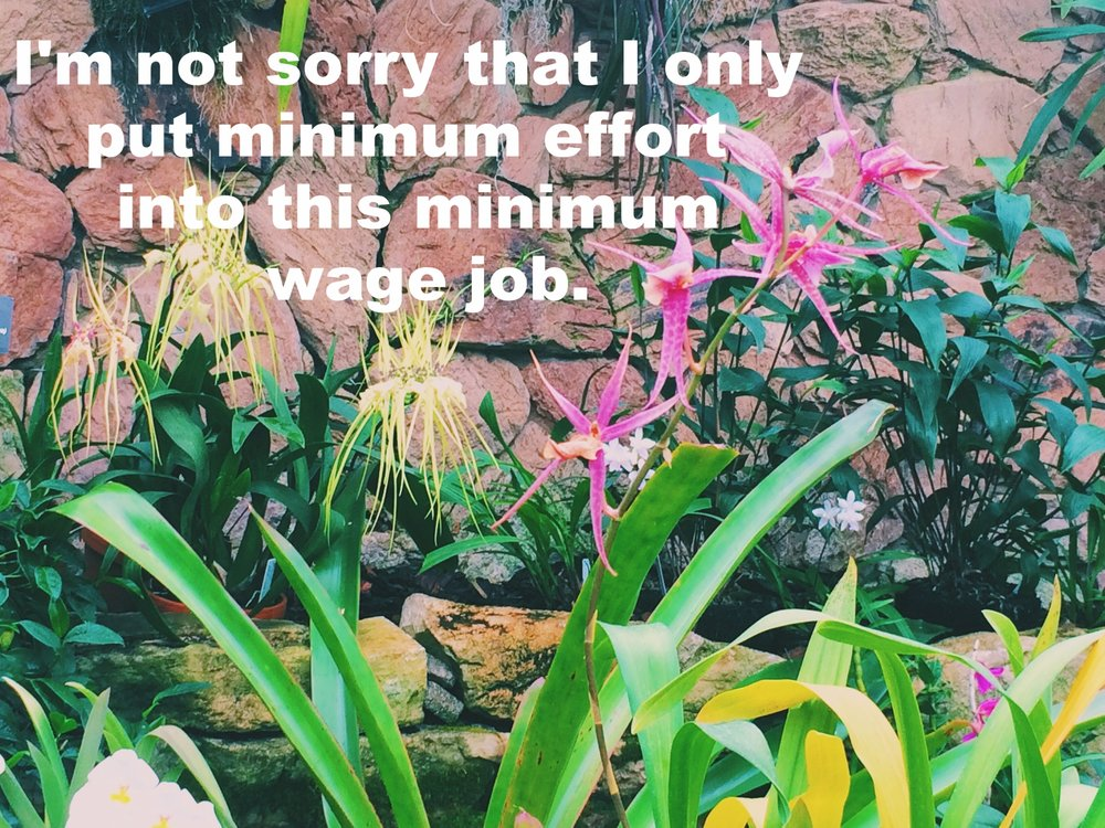 "Caroline December 9 2016 Image of pink and yellow spindly flowers against a stone backdrop. Leafy plants and stems surround them. ""I'm not sorry that I only put minimum effort into this minimum wage job"" is overlaid."