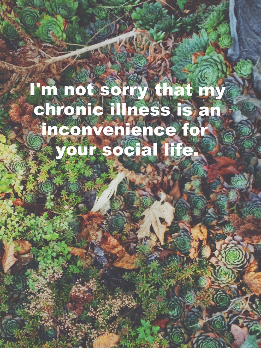 "Katie January 2 2017 Image of small green succulents, tundra plants, and clover on the ground with a few brown leaves laying over the top. ""I'm not sorry that my chronic illness is an inconvenience for your social life"" is overlaid."