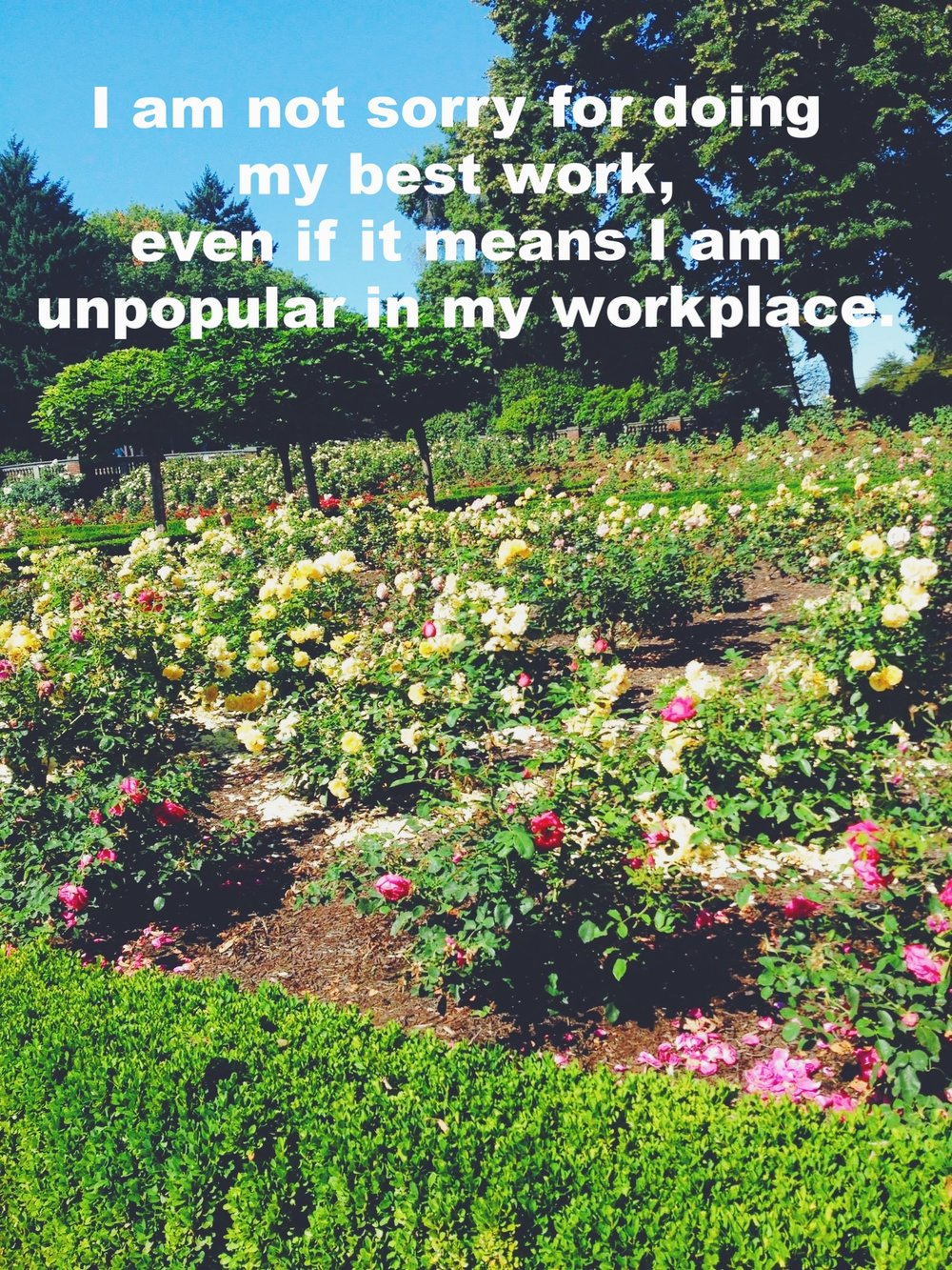 "Aurora February 17 2017 Image of a rose garden in a park. A hedge surrounds the roses and there are several short trees. ""I am not sorry for doing my best work, even if it means I am unpopular in my workplace"" is overlaid."