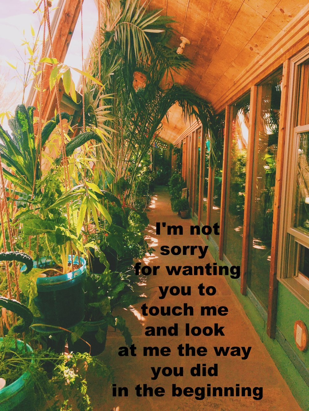 "Anonymous April 9 2017 Image of a sunlit hallway with a wooden ceiling. Potted plants of various kinds line one side, leaves grazing the ceiling and reaching into the walkway. The opposite side is lined with windows that are darker and reflect the plants and light from the other side.  ""I'm not sorry for wanting you to touch me and look at me the way you did in the beginning"" is overlaid in the walkway. Photo by Nino Cipri"