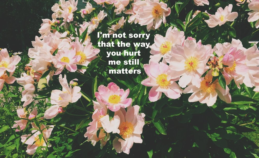 """Anonymous June 13 2017 A flowering peony bush with light pink flowers with yellow centers basks in the sun.""""I'm not sorry that the way you hurt me still matters"""" is overlaid."""