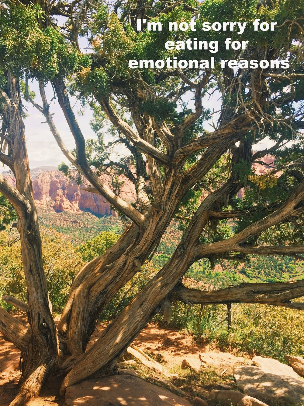 """Anonymous June 13 2017 Reddish mountains and lush trees show through the twisted low branches of a short tree atop another mountain. Light shines through the branches and leaves, creating shadows that dance on the rocks and earth below.""""I'm not sorry for eating for emotional reasons"""" is overlaid."""