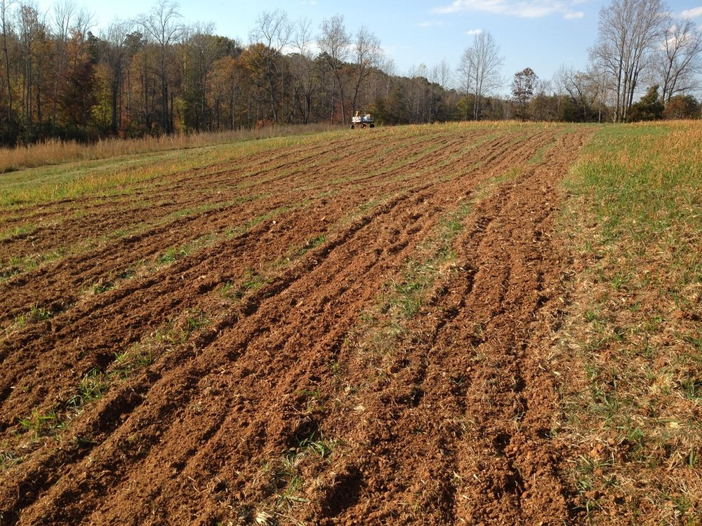 Cover crop mowed, soil nutrition amended, the farm's first beds tilled, and garlic ready to go in.