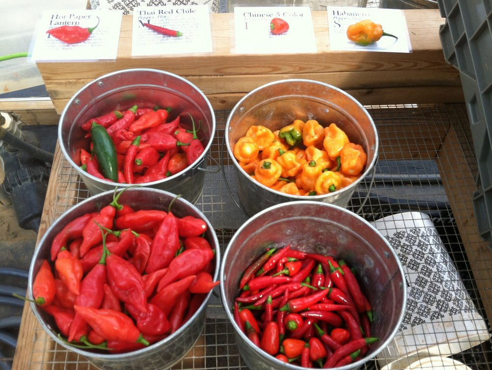 Extra hot peppers in bonus this week, so grab some to make sauce! 'Peach Habanero' & 'Red Paper Lantern'