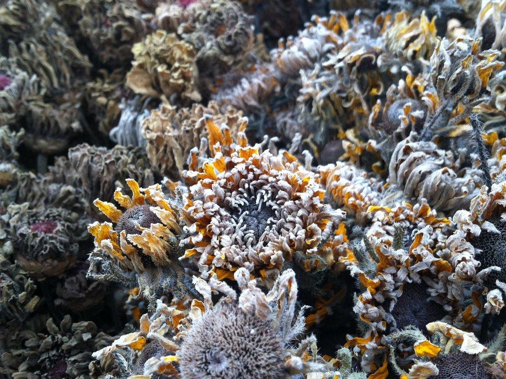 Les fleurs d'hiver ...