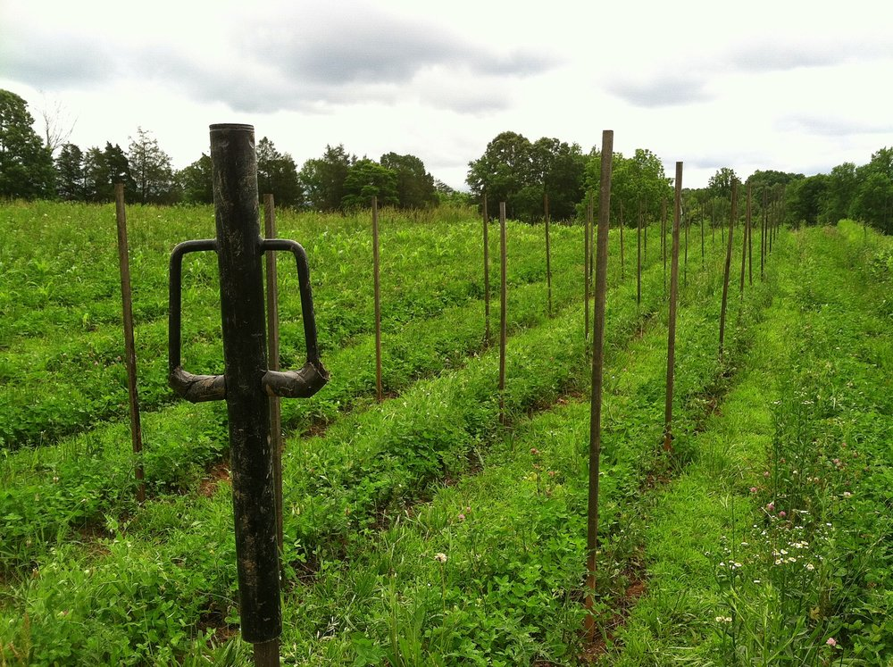 Tomato stakes go in -- so easily -- in the 1st and 2nd plantings, while we wait for some drier soil to mow the clover down beside them.