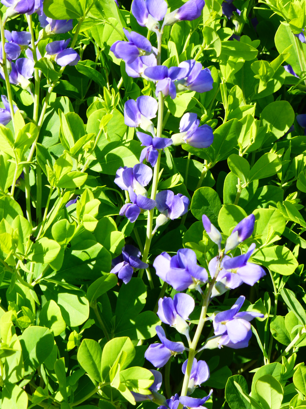 TPAC_flowers_1.jpg