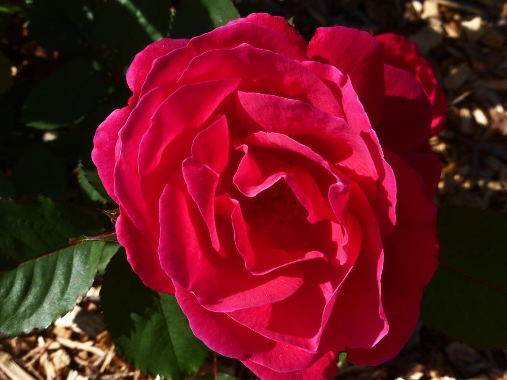 TPAC_flowers_4.jpg