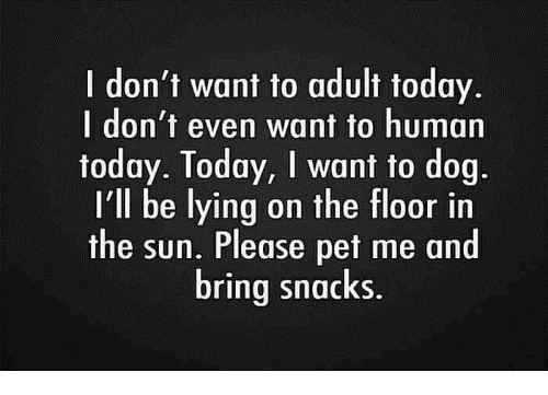 No adult.png