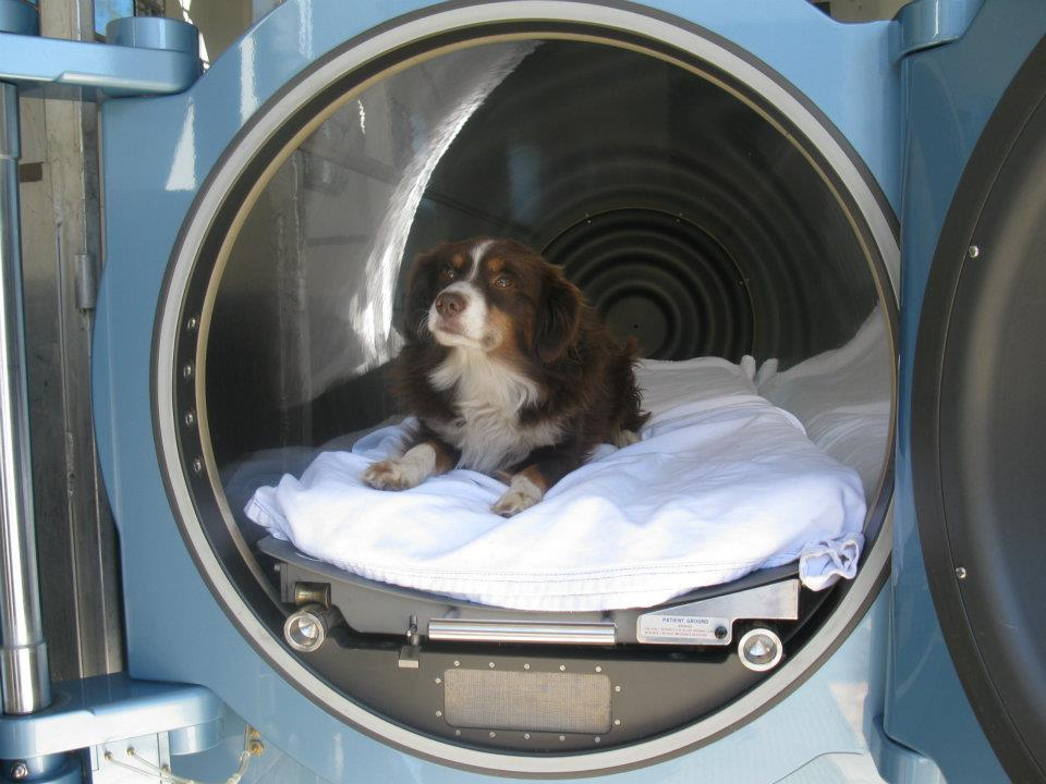 Mobile Climate Controlled Hyperbaric Care For Your Animals