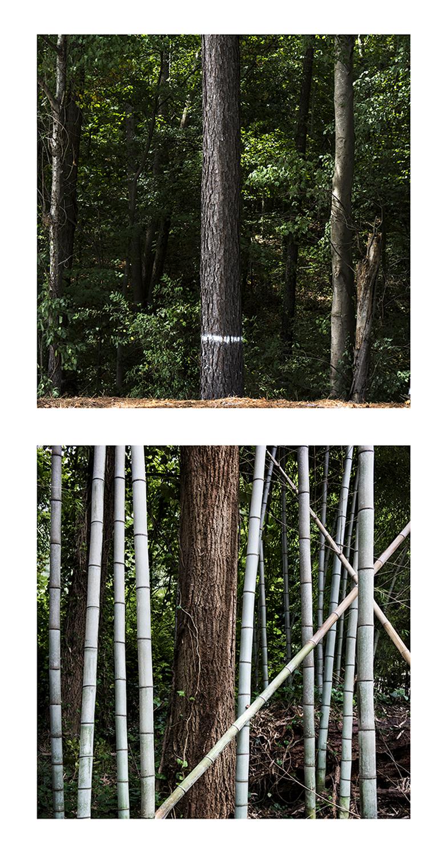 Bamboo nature.png