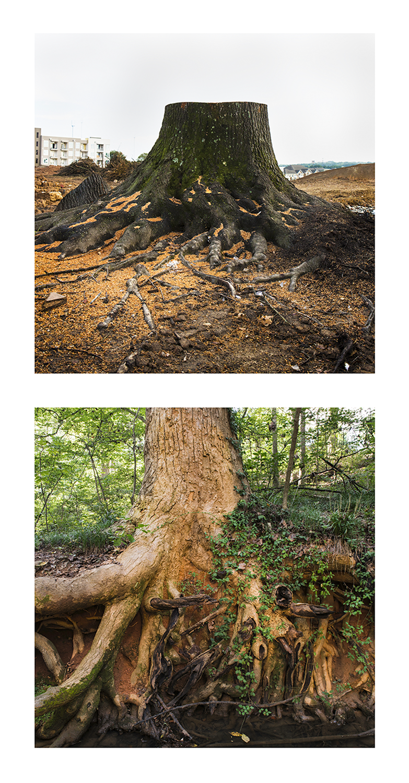 Stump nature.png