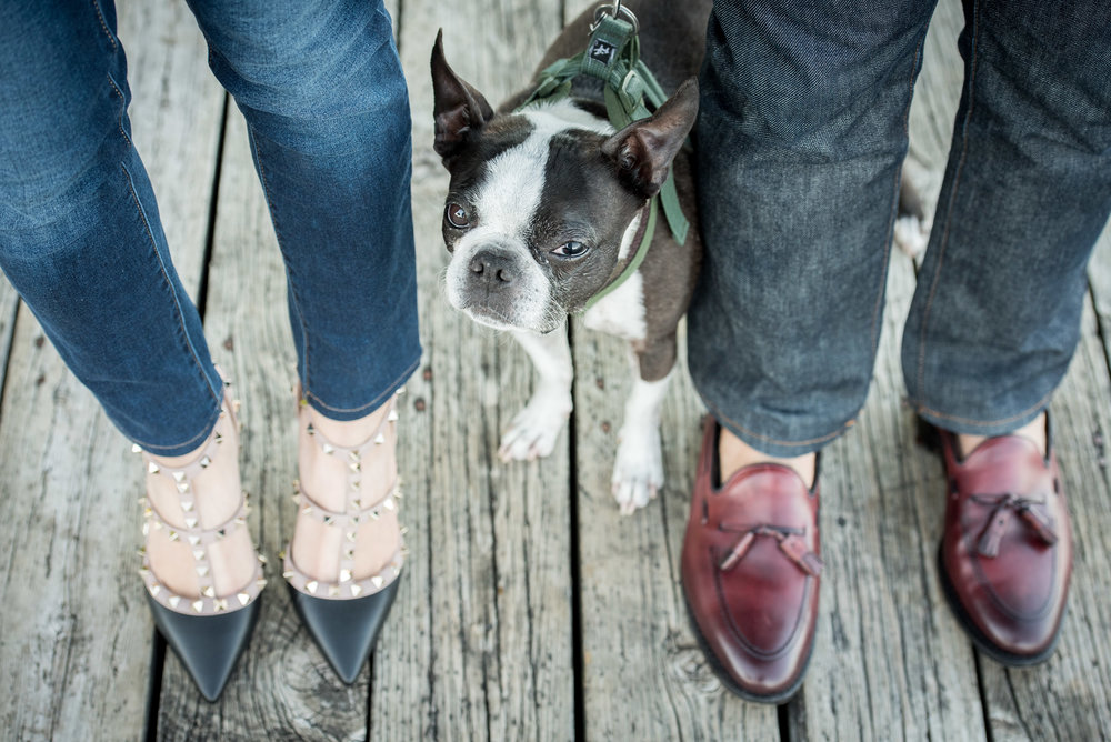 boulder pet dog photography