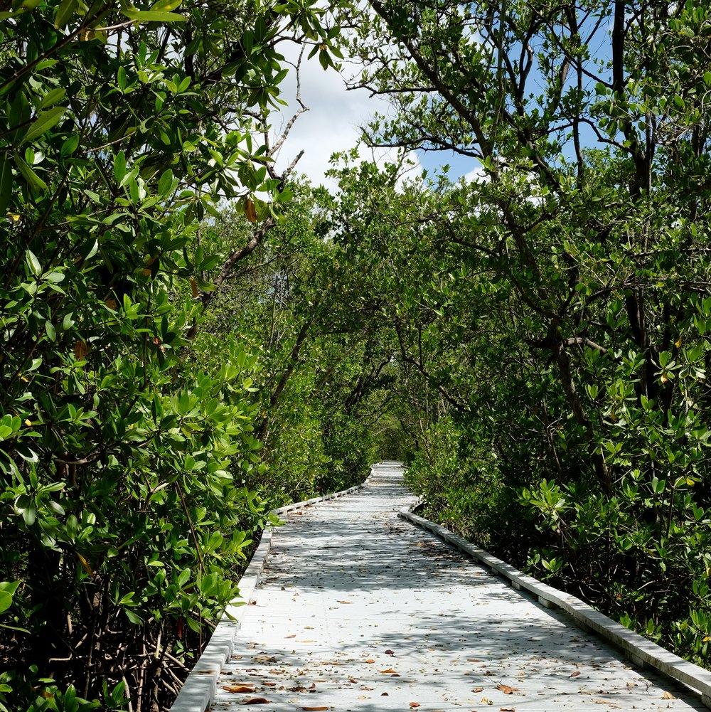 Matanzas Pass Preserve | Estero Bay