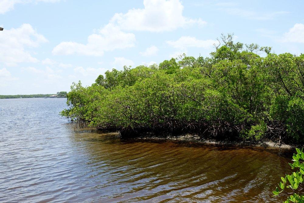 Estero Bay