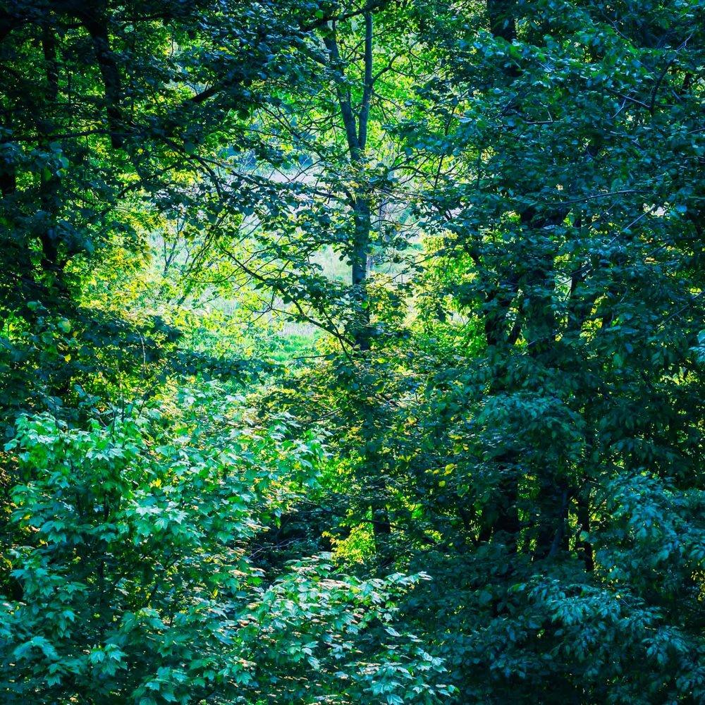 VERDANT SPRING - OVERHEAD THE TREETOPS MEET