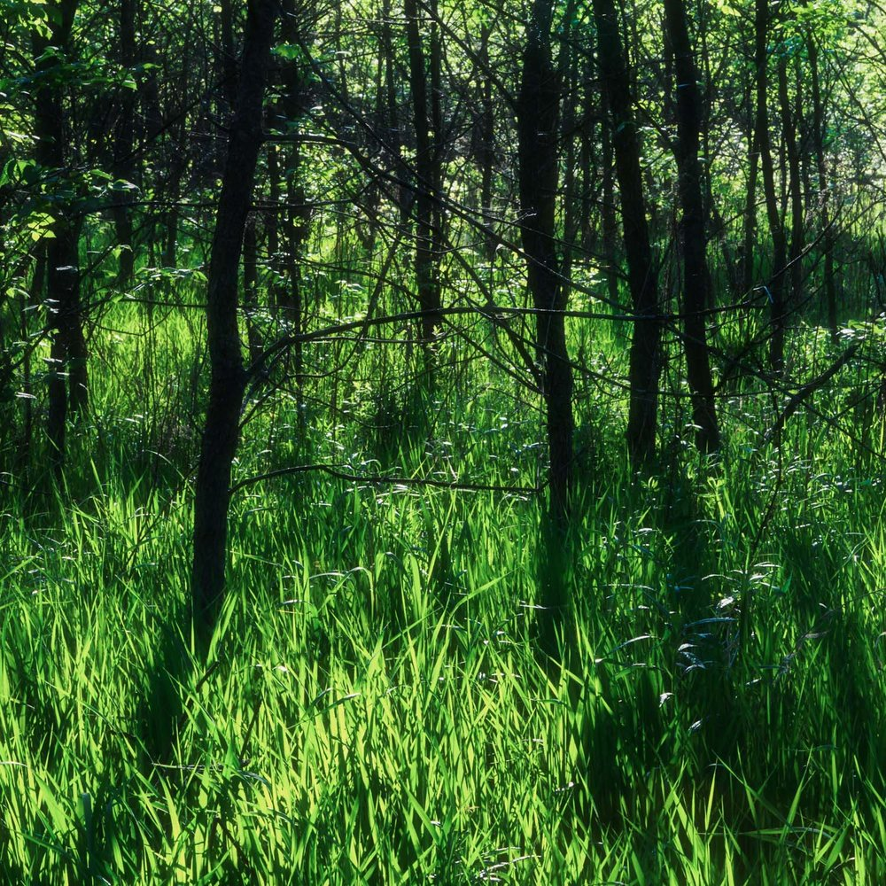 VERDANT SPRING - TO CONTEMPLATE IS TO LOOK AT SHADOWS