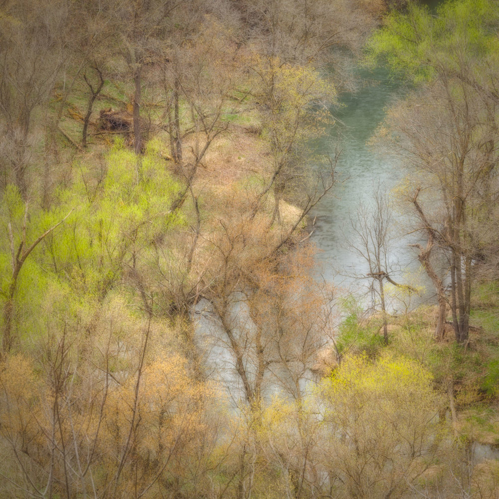 SPRING FROM THE BLUFF - THE WONDER IS WE CAN THESE TREES AND NOT WONDER MORE