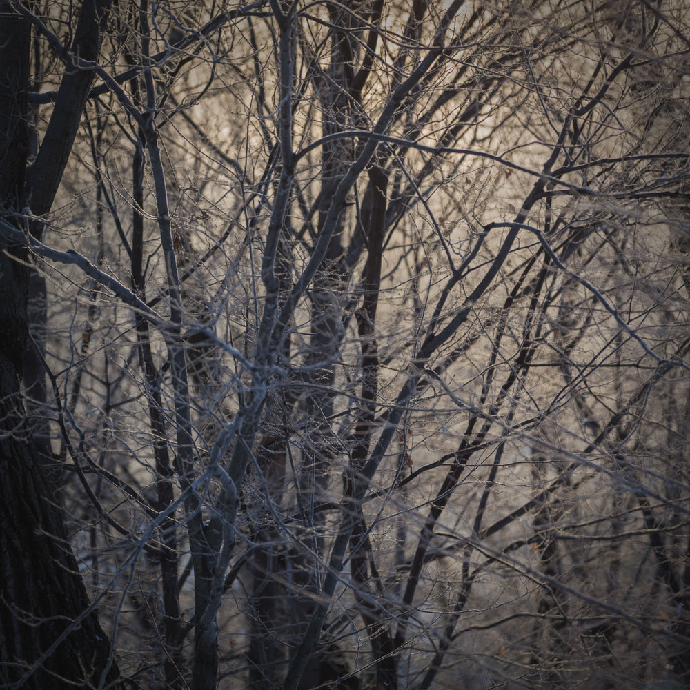 WINTER LIGHT - I KNEW, OF COURSE, THE TREES AND PLANTS HAD ROOTS... THE REAL MAGICIAN WAS LIGHT ITSELF