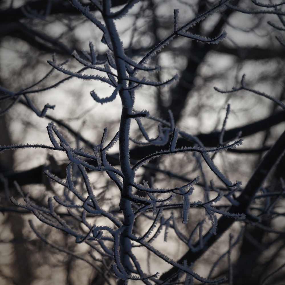 WINTER LIGHT - LET MY SOUL, A SHINY TREE, SILVER BRANCHES LIFT TOWARDS THEE