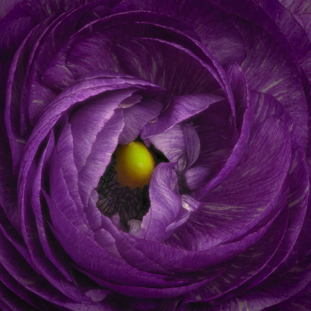 Center of Attraction -  Purple