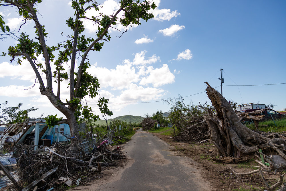 Old trees ripped down and houses destroyed in Vieques, Puerto Rico