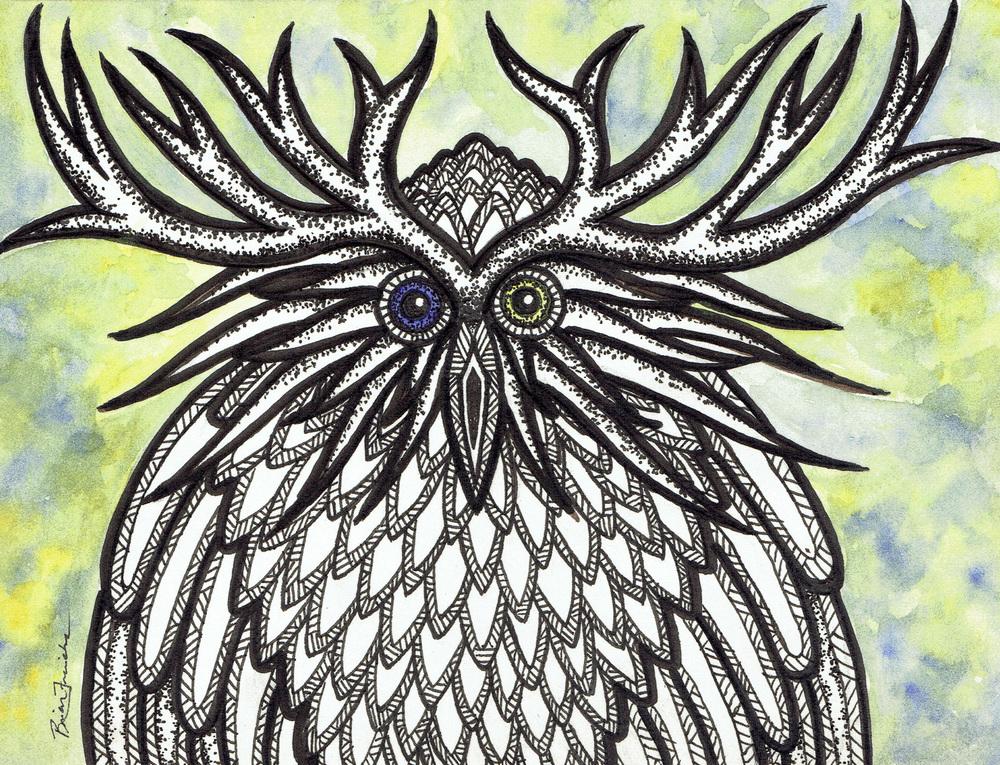 Knob Cone Pine Owl