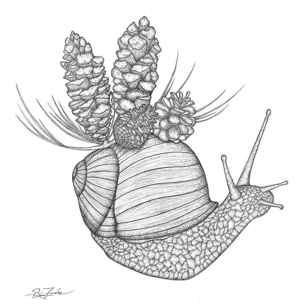 Appalachian Snail