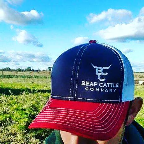 Beaf Cattle Company
