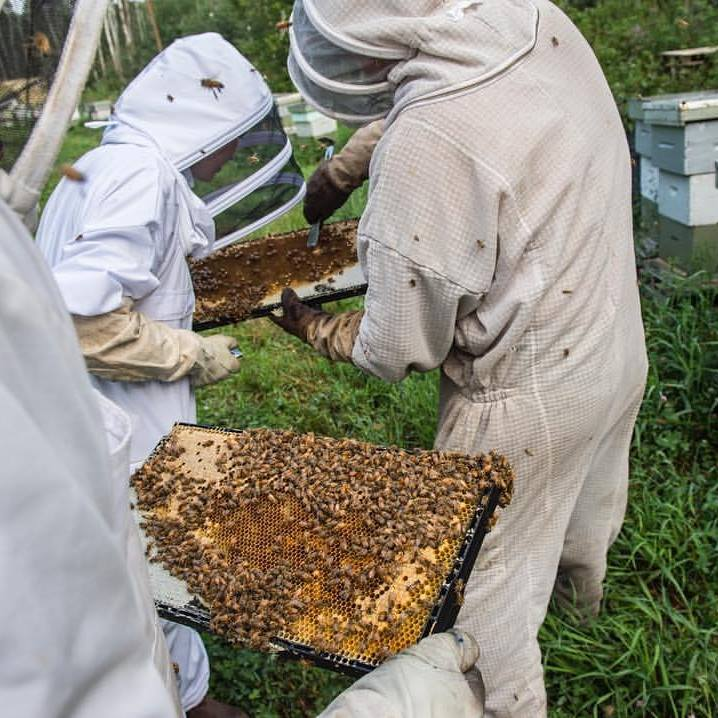 Why are the bees dying? Northern Alberta scientists are helping find the answer.  Edmonton Journal.