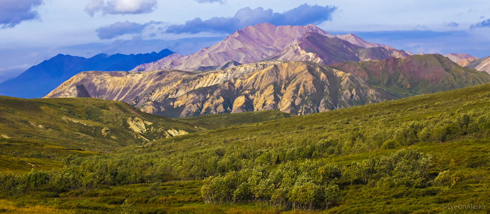 Denali National Park.
