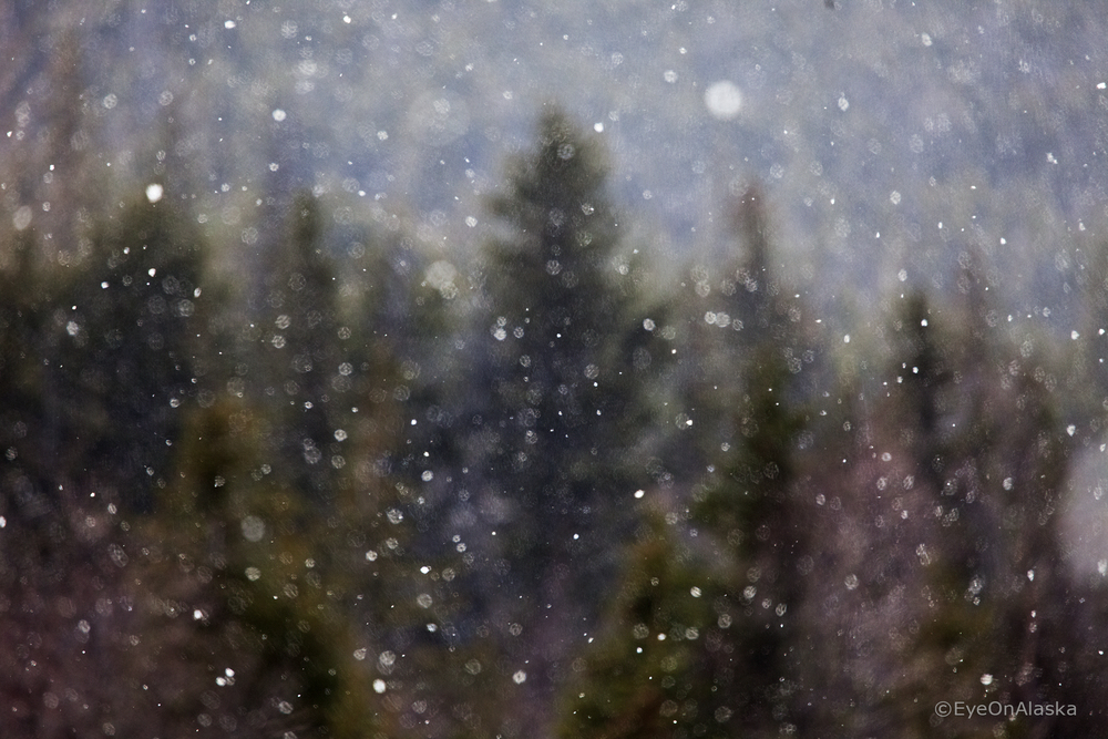 First snowflakes of the season.