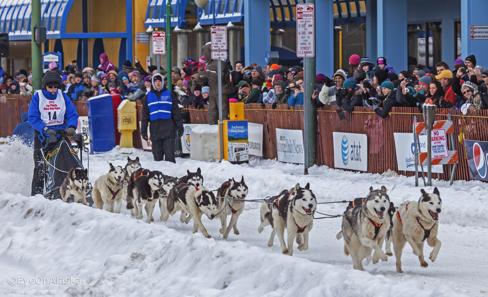 Anchorage Fur Rondy, Sled dogs #1