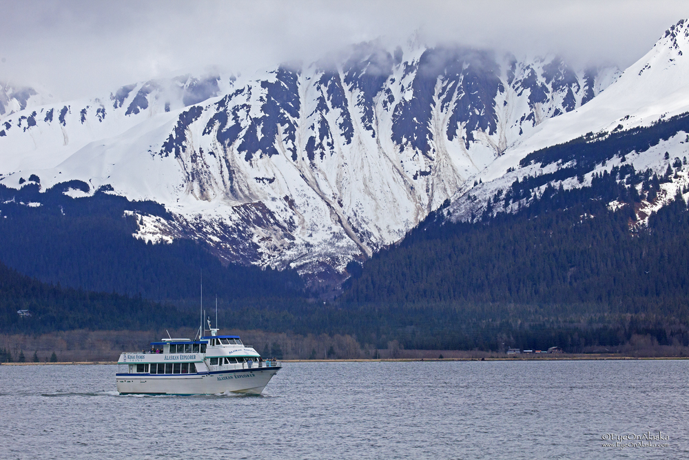 Kenai Fjords tour boat heading out to find migrating Gray Whales on Friday afternoon.