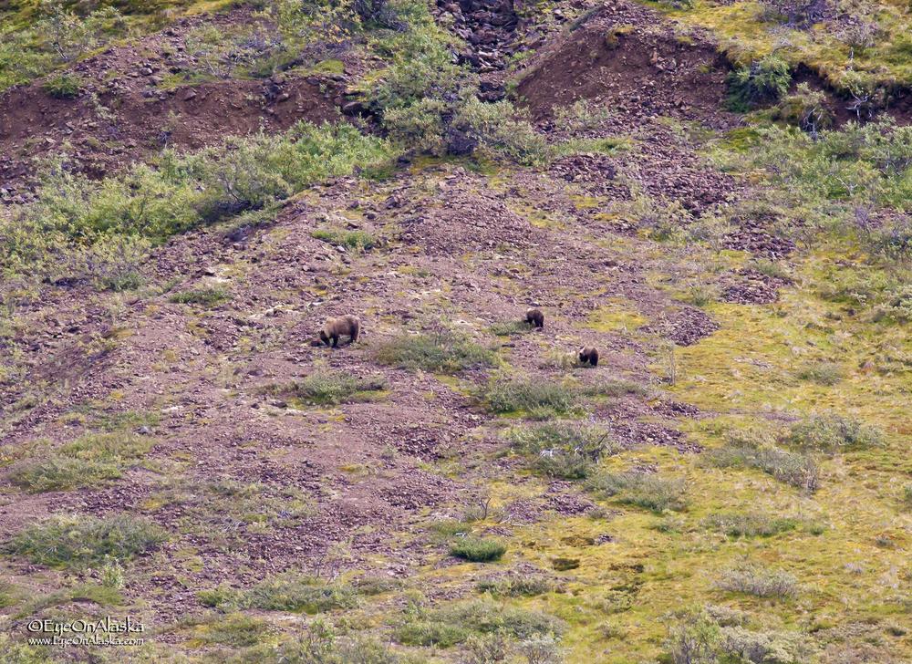 Mama bear and cubs.