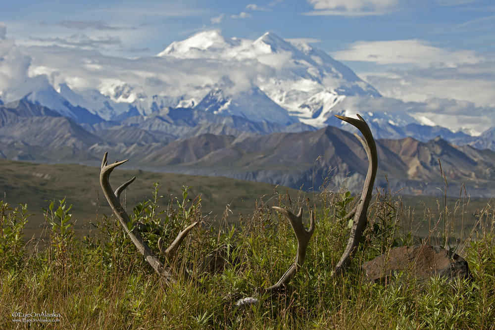 Caribou horns and Denali.