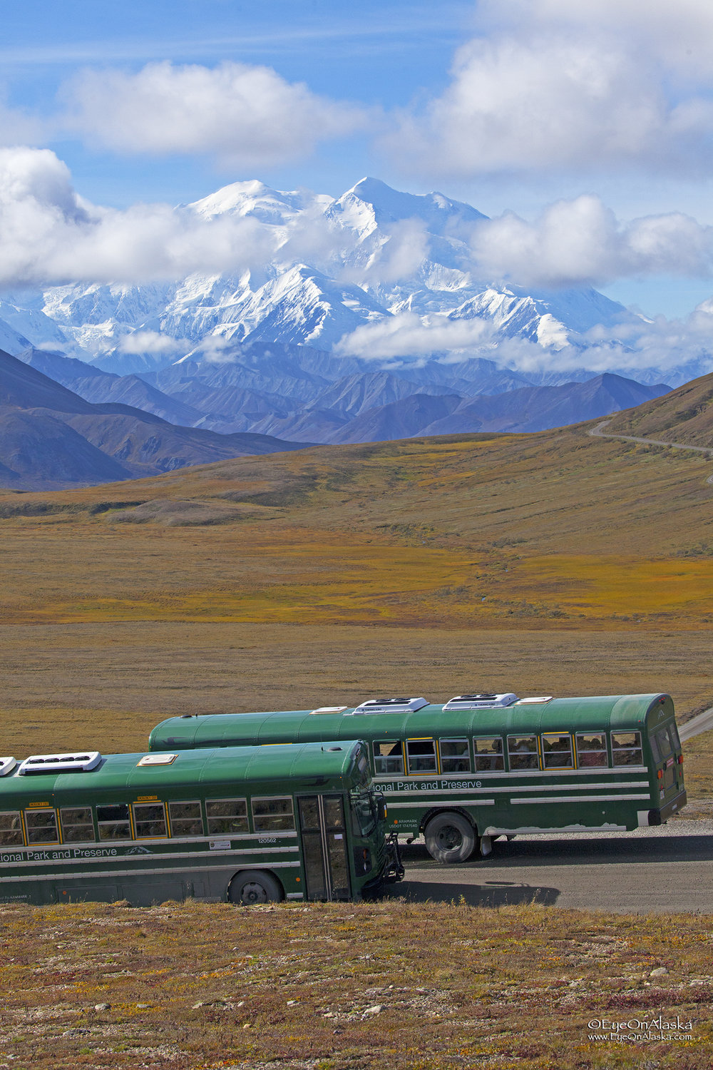 First-time visitors on the shuttle buses getting to join the 30% club.  That's about how many people get to see Denali while they're visiting.
