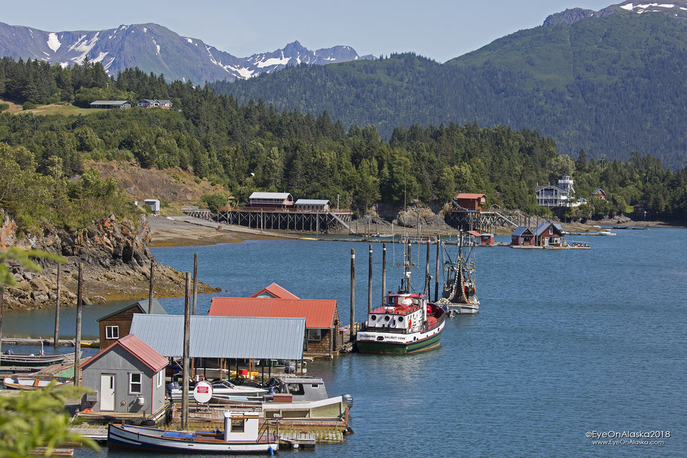 Downtown Halibut Cove ;)  One of our favorite hidden gems.