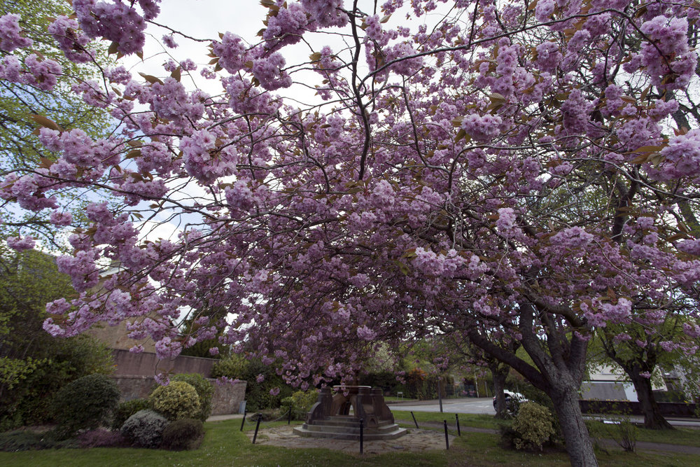 It's spring in Inverness and the city is in bloom.