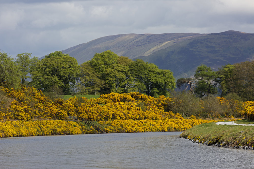 Following the canal and gorse into Fort William.