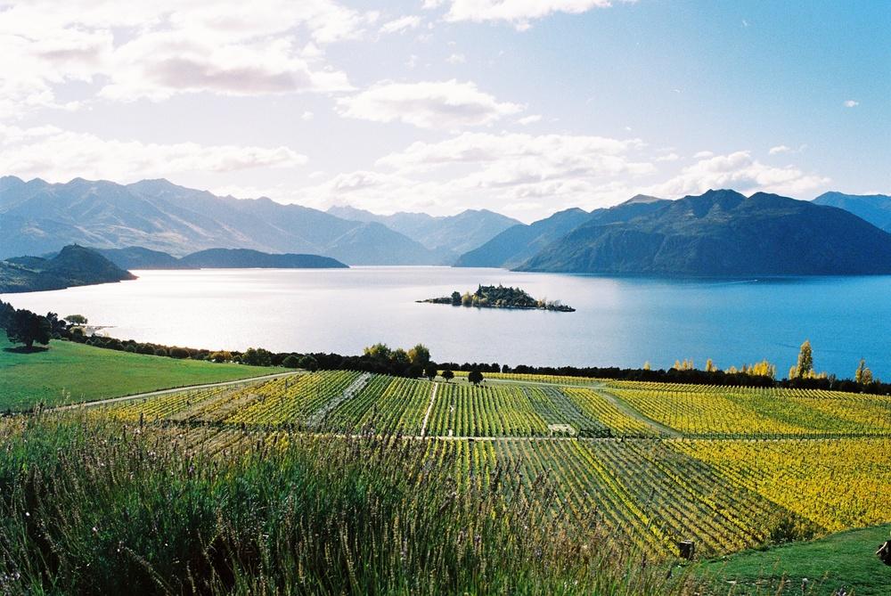 The view from Rippon Winery at Lake Wanaka
