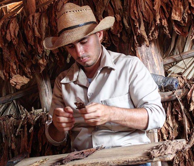 In Viñales rolling a fresh cigar. #cuba #cubano #cubancigars #viñales #habanos #travel #travelgram #travelpics