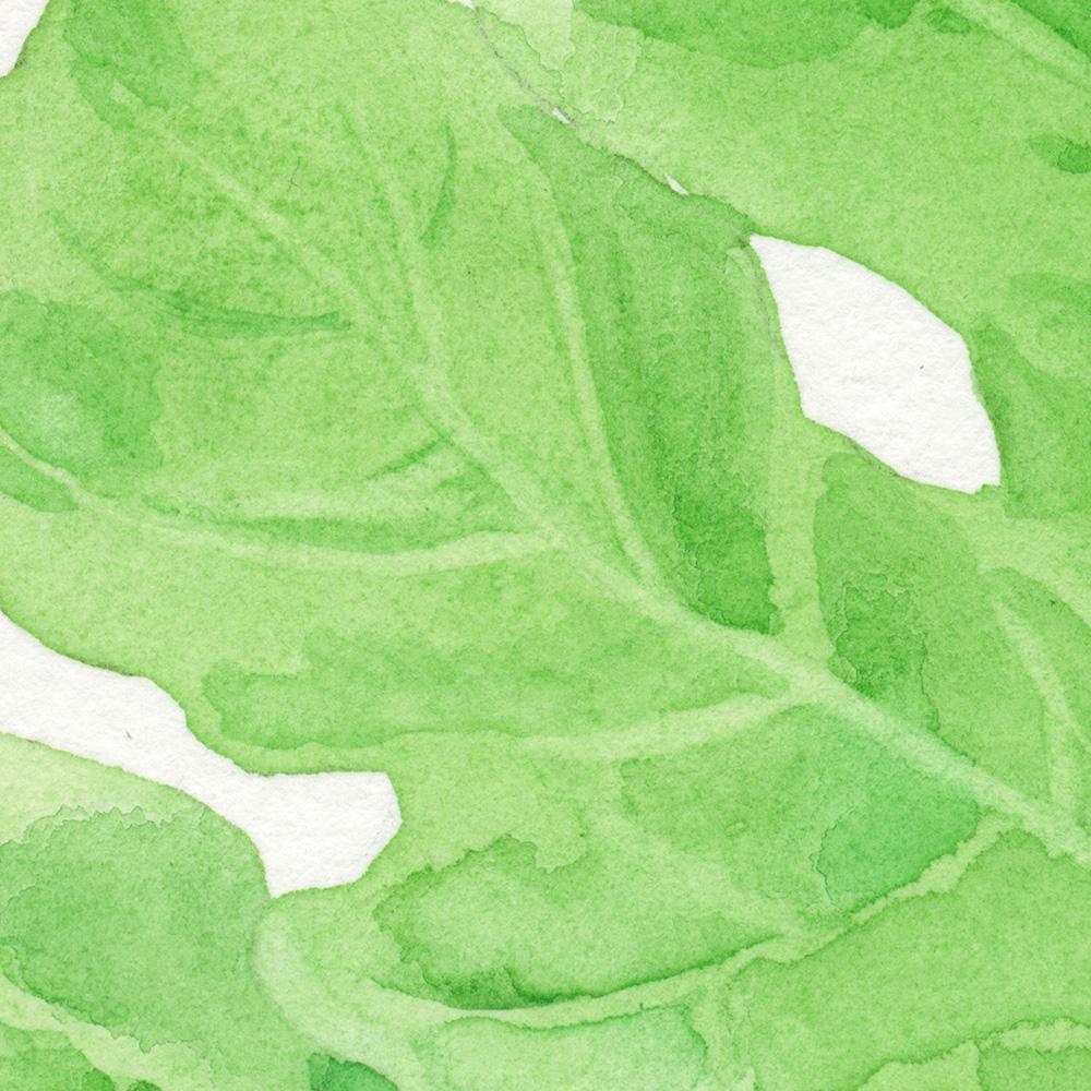 watermelon leaf by wanru kemp