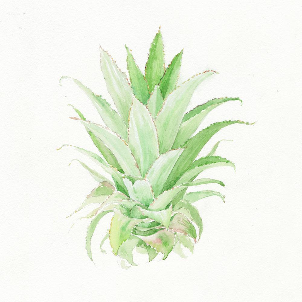 pineapple watercolor by wanru kemp