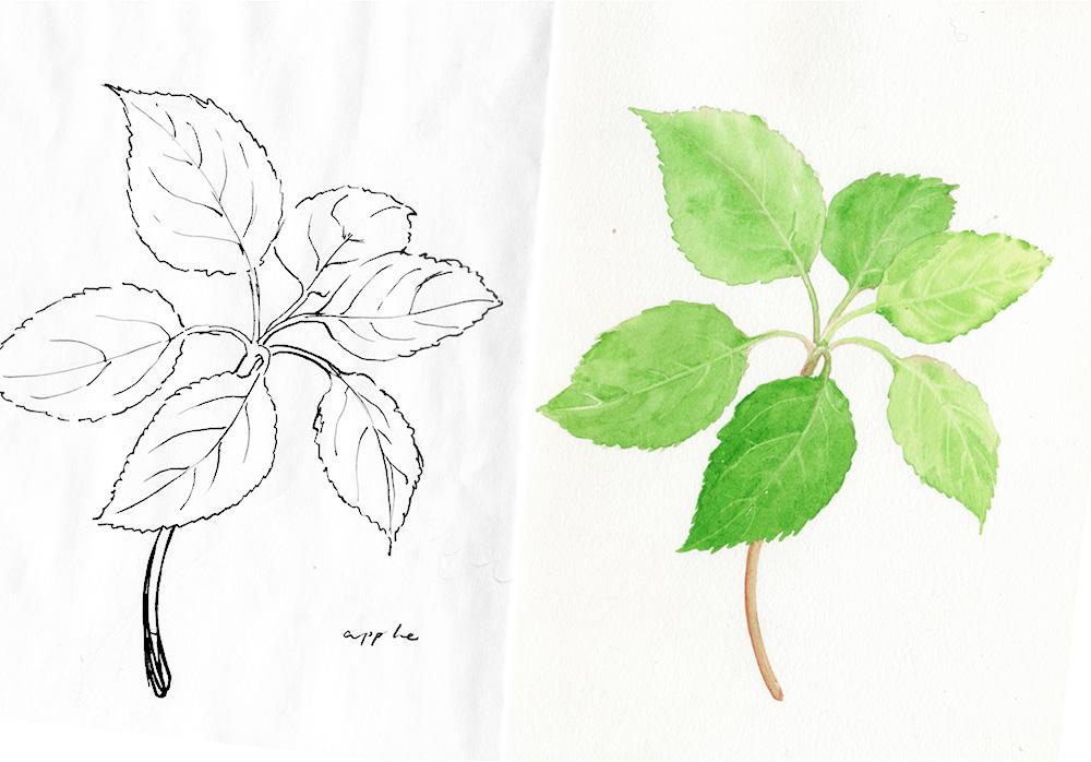 commission-apple leaves-h-by-wanru kemp.jpg